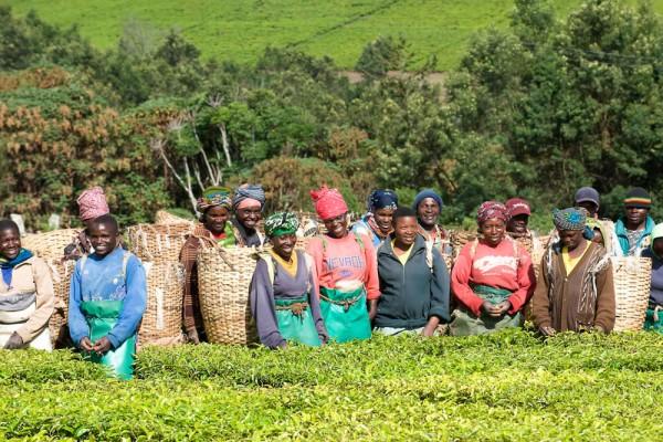 Diese Mitarbeiter ernten und arbeiten im Garten Luponde für Sie